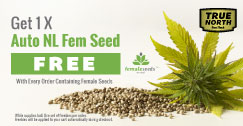 Female Seeds Promotion