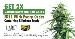 Blimburn Seeds Promo