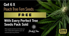 Perfect Tree Seeds Promo