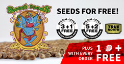 Site-Wide Sweet Seeds Promo