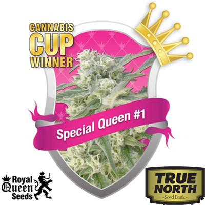 Special Queen #1 Feminized Seeds (Royal Queen Seeds)