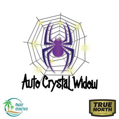 Auto Crystal Widow Feminized Seeds (Oasis Genetics)
