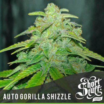 AUTO Gorilla Shizzle FEMINIZED Seeds (Shortstuff Seeds)