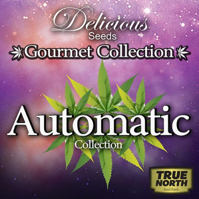 AUTOMATIC Gourmet Collection Strains #2 (Delicious Seeds)
