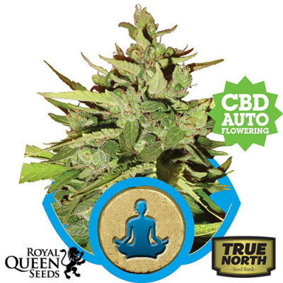 Stress Killer Auto Feminized Seeds (Royal Queen Seeds)