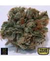 707 Headband REGULAR Seeds (BC Bud Depot)