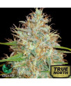 Afghan Kush x Skunk Feminized Seeds (World of Seeds)