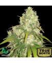 Afghan Kush x Yumbolt Feminized Seeds (World of Seeds)