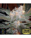 The Purps FEMINIZED Seeds (BC Bud Depot)