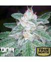 The OG 18 x Skunk REGULAR Seeds (DNA Genetics)