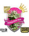 Shining Silver Haze Feminized Seeds (Royal Queen Seeds)