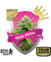 White Widow Automatic Feminized (Royal Queen Seeds)