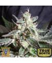 Black Jack FAST Version Feminized Seeds (Sweet Seeds)