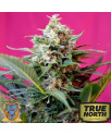 Big Devil XL Auto Feminized Seeds (Sweet Seeds)