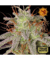Amnesia Lemon Feminized Seeds (Barney's Farm)