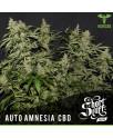 AUTO Amnesia CBD FEMINIZED Seeds (Shortstuff Seeds)