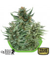 Autoflowering Mix Feminized Seeds (Royal Queen Seeds)