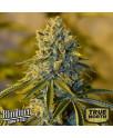 Bruce Banner #3 FEMINIZED Seeds (BlimBurn Seeds)