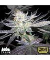 Bubba Kush Feminized Seeds (Canuk Seeds)
