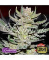 Unknown Kush Regular Seeds (Delicious Seeds)