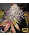 Fruit Cup FEMINIZED Seeds (Cali Connection)