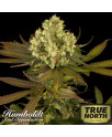 Sour Blueberry Regular Seeds (Humboldt Seed Org)