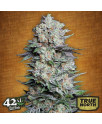 Mexican Airlines Auto Feminized Seeds (FastBuds)