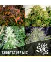 Shortstuff Mix AUTOFLOWERING REGULAR Seeds (Shortstuff Seeds)