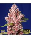 Tropicanna Poison F1 Fast Version Feminized Seeds (Sweet Seeds)