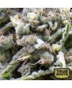 AUTO White Widow FEMINIZED Seeds (Pyramid Seeds)
