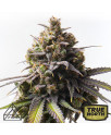 Zkittlez x AK Feminized Seeds (Prism Seeds)