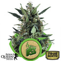 Blue Cheese Auto Feminized Seeds (Royal Queen Seeds)