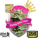 Shining Silver Haze Feminized Seeds (Royal Queen Seeds)