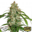 CBD Auto White Widow Feminized Seeds (Dutch Passion)