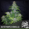 AUTO Purple Gorilla FEMINIZED Seeds (Shortstuff Seeds)