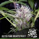 AUTO Pink Grapefruit FEMINIZED Seeds (Shortstuff Seeds)