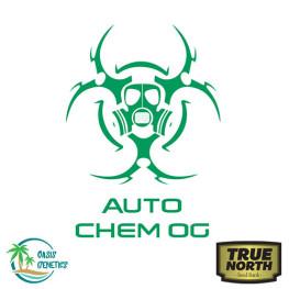 Auto Chem OG Feminized Seeds (Oasis Genetics)