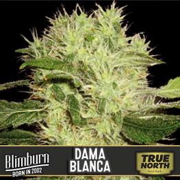 Dama Blanca Feminized Seeds (BlimBurn Seeds)