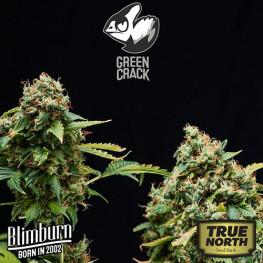 Green Crack FEMINIZED Seeds (BlimBurn Seeds)