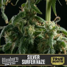 Silversurfer Haze Feminized Seeds (BlimBurn Seeds)