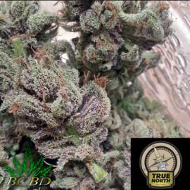 SoCal Master Kush REGULAR Seeds (BC Bud Depot)