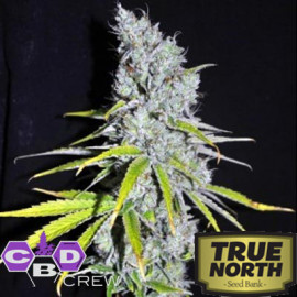 CBD Skunk Haze FEMINIZED Seeds (CBD Crew)