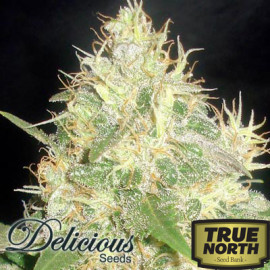 Northern Light Blue FEMINIZED Seeds (Delicious Seeds)