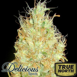 Fruity Chronic Juice FEMINIZED Seeds (Delicious Seeds)