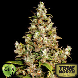 Monster FEMINIZED Seeds (EVA Seeds)