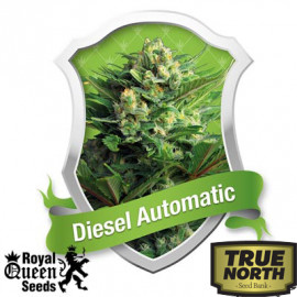 Diesel Automatic Feminized Seeds (Royal Queen Seeds)