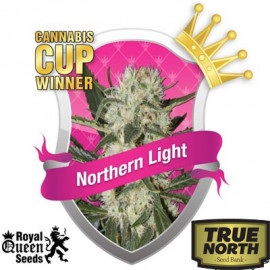 Northern Light Feminized Seeds (Royal Queen Seeds)