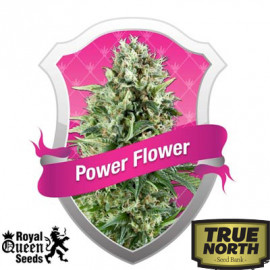 Power Flower Feminized Seeds (Royal Queen Seeds)