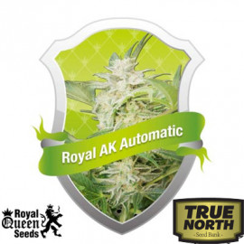 Royal AK Automatic Feminized Seeds (Royal Queen Seeds)