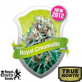 Royal Creamatic Automatic Feminized Seeds (Royal Queen Seeds)